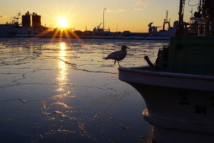 一休み Bird Sunset