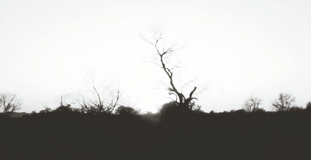 Naked Trees Tree Blac&white  B&w Nature