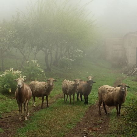 'The Silence of the lambs' EyeEm Best Shots Sheep Fog Portrait The Moment - 2015 EyeEm Awards Capture The Moment