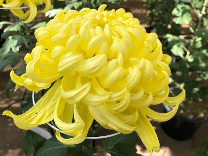 Yellow Close-up Plant Growth Petal Flower Flower Head