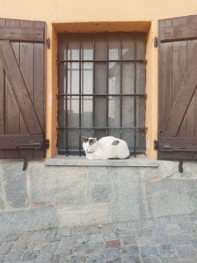 One Cat Cat At Window Relaxing Cat Langhe In The Street Village Street Travel Destination Village Window With Cat Architecture Built Structure Animal Themes Day One Animal Outdoors Pets No People Building Exterior Mammal Domestic Animals