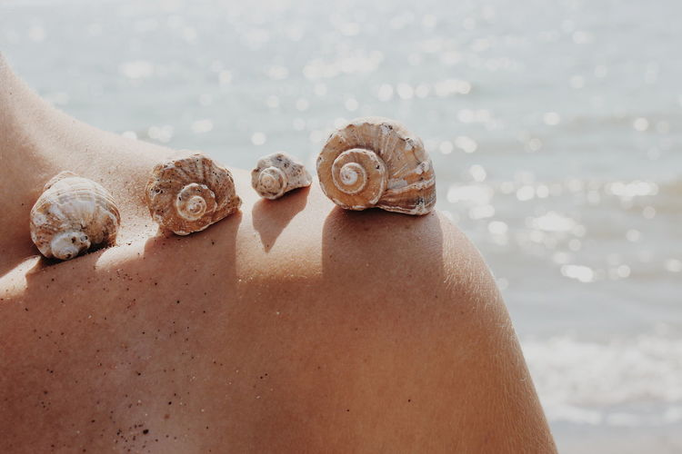 Close-Up Of Seashells On Woman Shoulder At Beach During Sunny Day