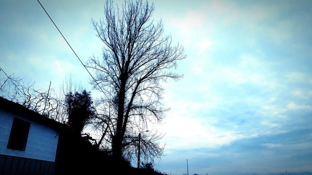 Today Morning Todaymorning Tree Sky Blie Bluesky Nature Pure