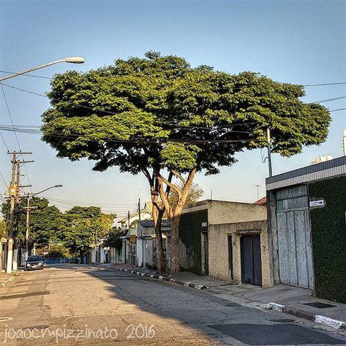 Tree Plants Nature Streetphotography Urban Streetphoto_brasil Colors City Zonasul Saopaulo Brasil Photograph Photography