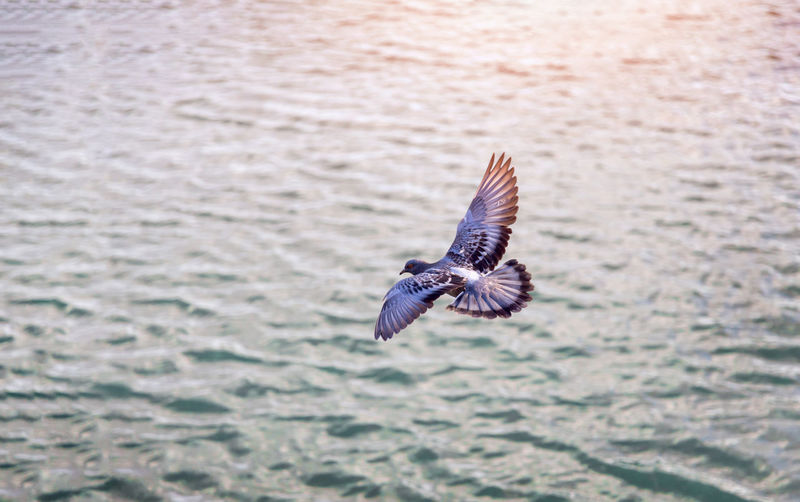 Bird flying on water background to show free on nature concept