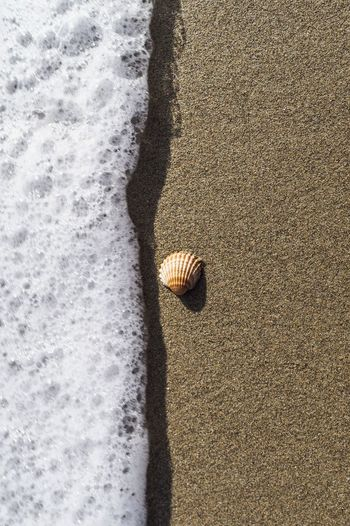Shell and sea Playa Spiaggia Meer Relax Mar Shells Mare Wave Metaponto Sabbia Conchiglie Coquillage Sun Soleil Sole Relax Time  High Angle View Day Sunlight Indoors