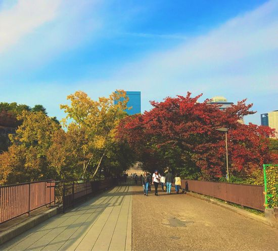 Tree Sky Built Structure Architecture Real People Outdoors Building Exterior Sunlight Day Nature Growth Autumn Women Men City Beauty In Nature Large Group Of People