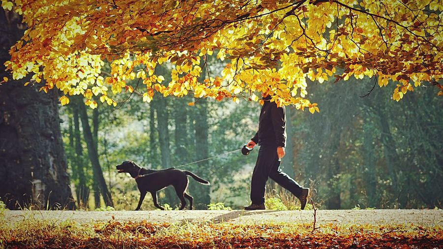 Low section of man with dog walking on road amidst trees during autumn