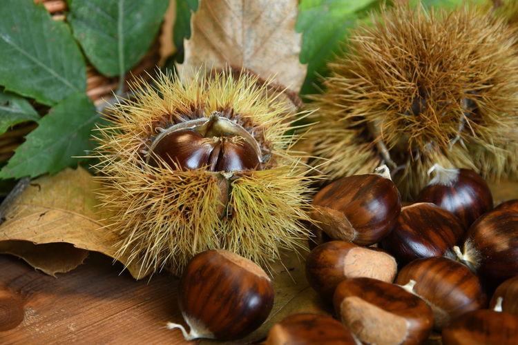Chestnut - Food