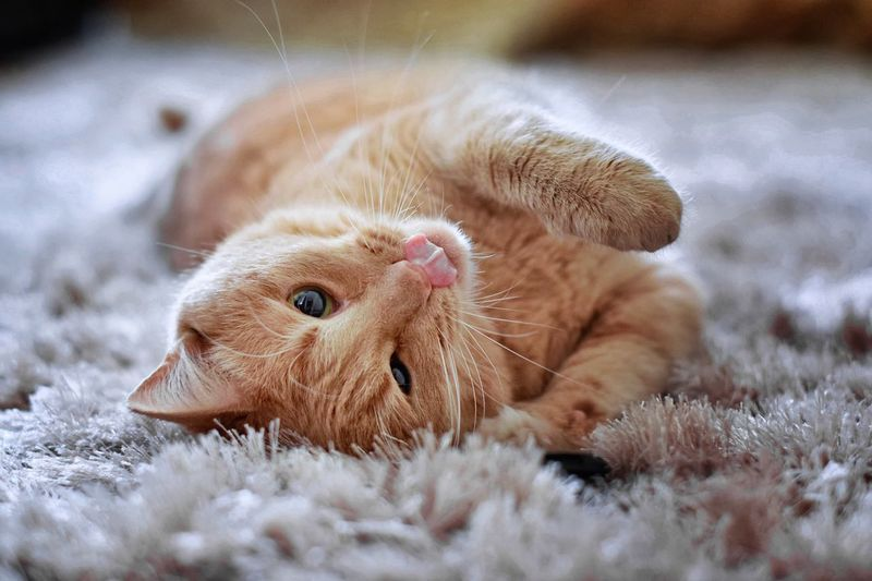 Close-up of cat lying on carpet