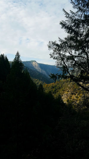 Bald Rock in northern California Bald Rock Beauty In Nature Day Forest Landscape Mountain Nature No People Outdoors Scenics Tree