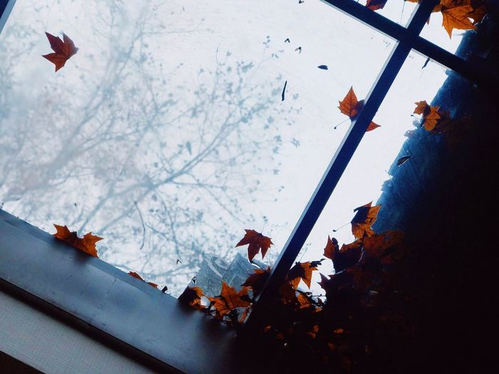 Skylight Fallen Leaf Leaves Nature Tree Built Structure Low Angle View Outdoors Beauty In Nature