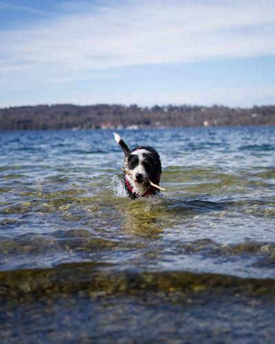 Dog at the lake in spring Dog Lakers Springtime Starnbergersee Playing Animal