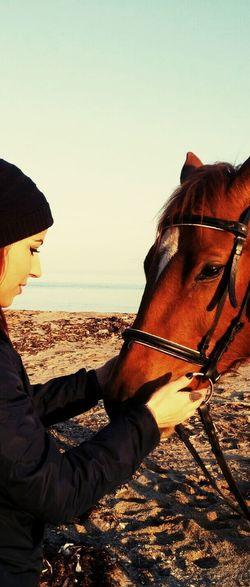 Horse Animal Love Relaxing Myshotsmyphotography Travel Beatifulday Sea Beach Istanbul Turkey EyeEm Gallery Taking Photo