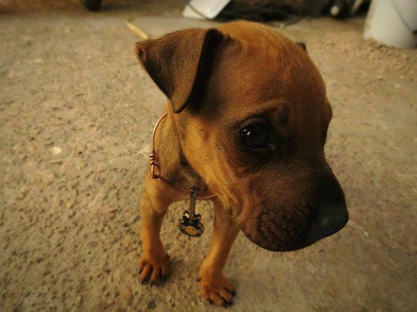 Sadness One Animal Animal Domestic Animals Dog Pets No People Close-up Chihuahua, Mexico Leo Sáenz Animal Themes The Portraitist - 2018 EyeEm Awards