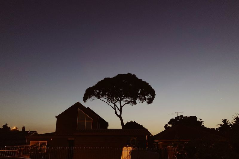 Silhouette tree and buildings against sky at dusk