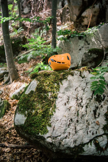 Climbing Close-up Day Focus On Foreground Growth Land Moss Nature No People Orange Color Outdoors Plant Plant Part Pumpkin Rock Rock - Object Safety Selective Focus Solid Tree Tree Trunk Trunk