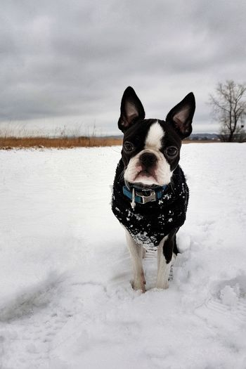 Portrait of dog on snow field against sky