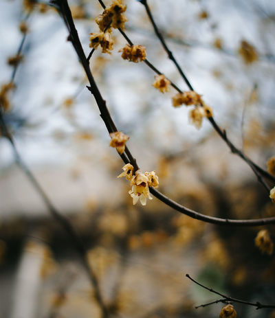 Branch Close-up Flower Freshness Mood Nature Outdoors Springtime Tree