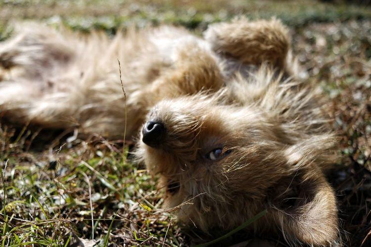 Showcase: January Little doggy