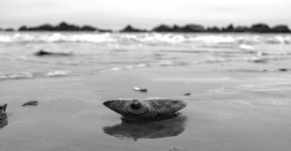 The coldness of a winter beach in the Northeast. Black And White Sea Depth Of Field Photography Focus On Subject Blurred Background Landscape Beauty In Nature Sand Clamshell Beach Sea Nature