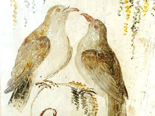 Textured  No People Frescos Fresco Wall Fresco Decorations Fresco N Mural Frescoes Fresco Fresco Paintings Traveling Voyage Old Town Salabaganza Parma Close-up Indoors  Birds