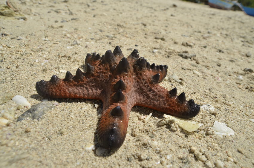 Animal Themes Animal Wildlife Animals In The Wild Beach Close-up Coral Reef Corals Day Live For The Story Macro Macro Photography Nature No People One Animal Outdoors Sand Sea Life Star Starfish  Starfish  Summer Summertime Travel Travel Destinations Vacations
