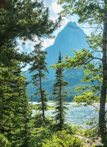 Western Woods Beauty In Nature Coniferous Tree Day Environment Forest Green Color Growth Idyllic Land Mountain Nature No People Non-urban Scene Outdoors Plant Remote Scenics - Nature Sky Tranquil Scene Tranquility Tree