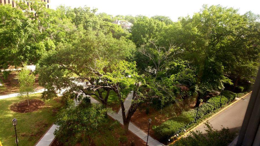 Trees Day Hospital Sunshine