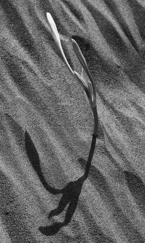 Plant Beachplant Blackandwhite B&w Siyahbeyaz S&B Beach Shadow High Angle View Table Close-up Vision Plant Life Detail Full Frame