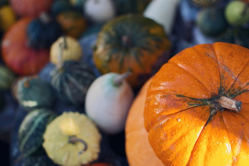 Pumpkin Food And Drink Food Vegetable Orange Color Healthy Eating Freshness Autumn Focus On Foreground Still Life Squash - Vegetable Halloween Choice Nature Agriculture Celebration Close-up Wellbeing No People Selective Focus
