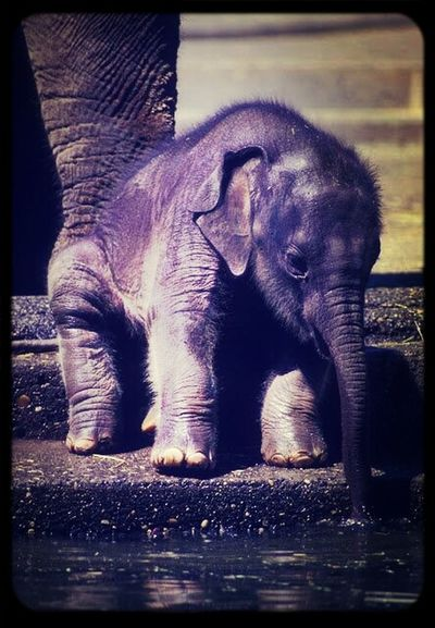 The boyfriend linked me this picture yesterday. Little things I'm grateful for: he came across a picture of a baby elephant and linked it to me right away because he knows how much I love them! Leaves me speechless sometimes Inlove Elephant Favorite Animal Cuteness Overload