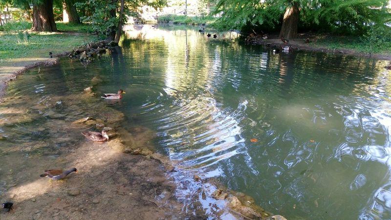 Nature Photography Nature Lake Ducks Amimals Water