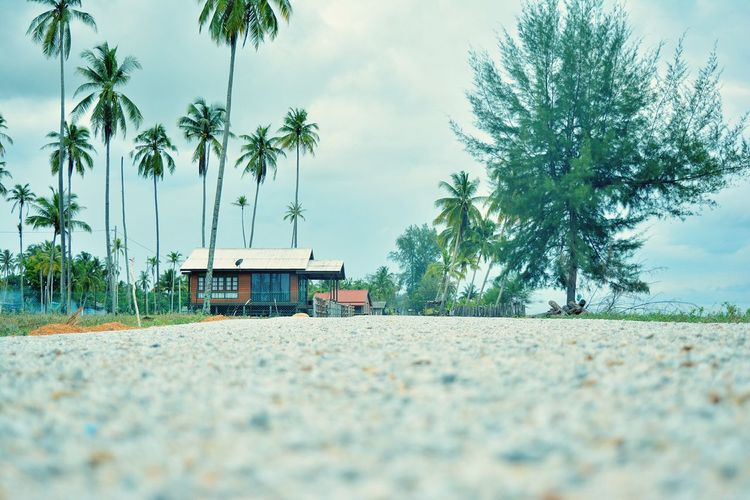 Tree Palm Tree Outdoors Beach Terengganu Pantai Mangkuk