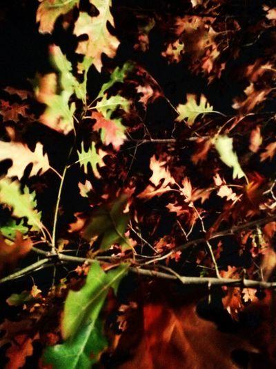 Mixtures Leaf 🍂