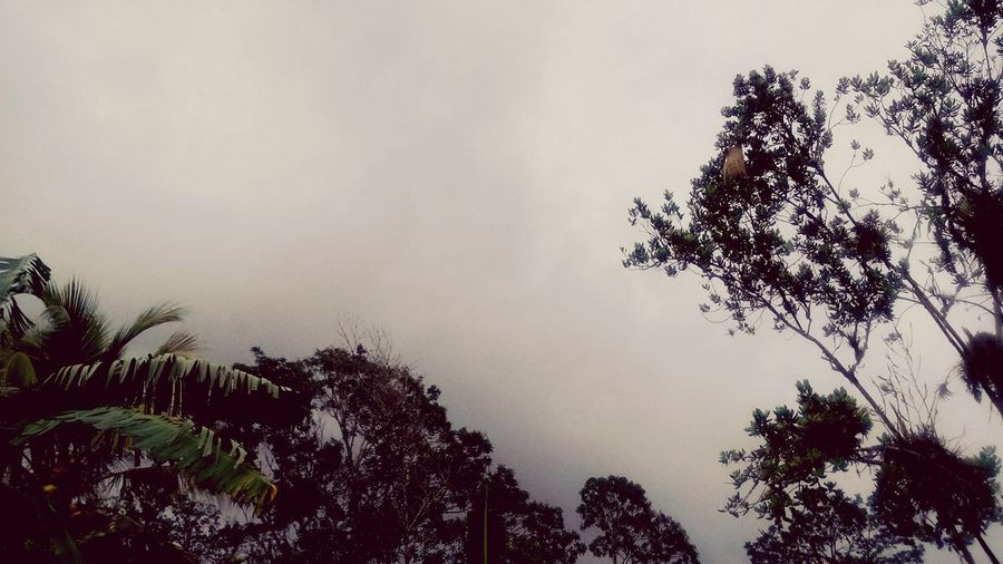 Tropics Evening Rainy Days☔ Rainy Day PhonePhotography Peace Tranquility Peaceofmind Lazyangles Home Sweet Home Relaxing Relaxing Moments Peaceful Trinidad And Tobago Nature_perfection Rain Greyskies Overcast Greenery Greyskies Grey Sky