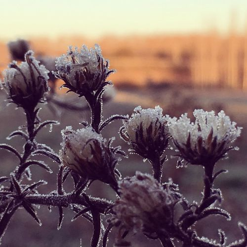 Dies freds!! Nature Nature_collection Landscape_Collection Beauty In Nature Cold Cold Temperature Cold Days Cold Winter ❄⛄ Winter Wintertime Ice