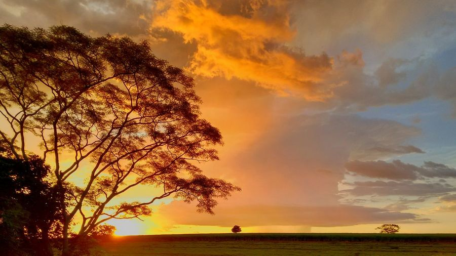 Ruralscene Tree Sunset Beauty Gold Colored Water Silhouette Summer Dramatic Sky Sky
