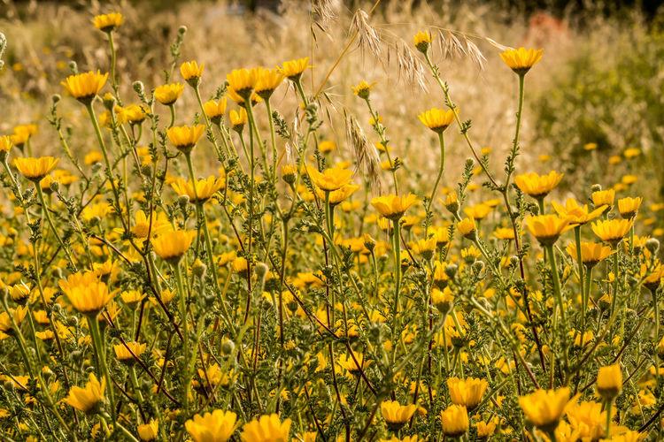 Field Grass Green Holiday Yellow Flower Flower Outdoor Photography Springtime
