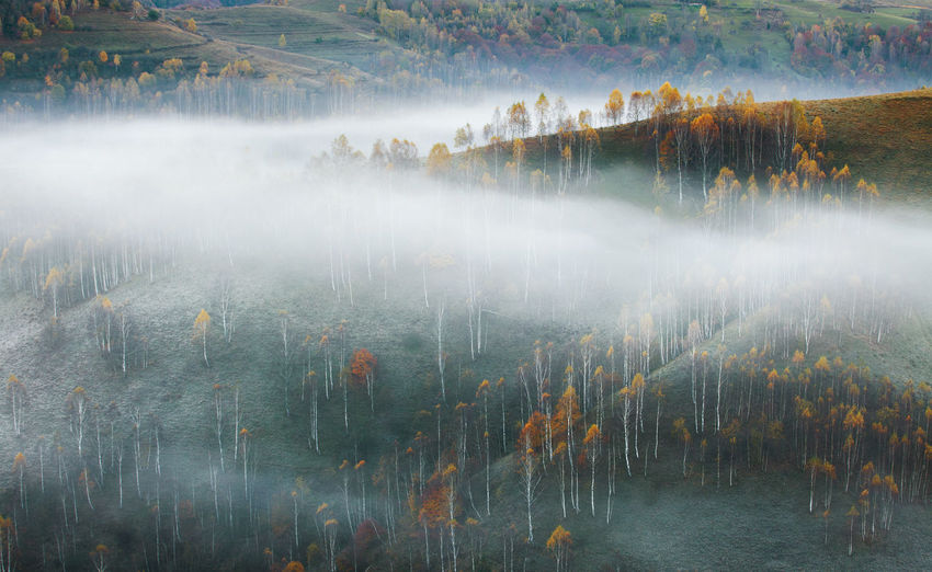 Foggy morning scene from Apuseni Mountains, Romania. Atmosphere Autumn Morning Tree Beauty In Nature Countryside Fog Foggy Forest Hazy  Hill Idyllic Landscape Mist Mood Mountain Mountain Range Mountains Nature No People Outdoors Texture Tranquil Scene Tranquility Valley