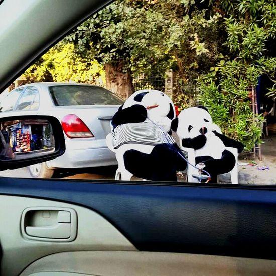 Car Sitting Tree Animal Themes Day Outdoors No People PANDA ♡♡ Pandas♥ First Eyeem Photo