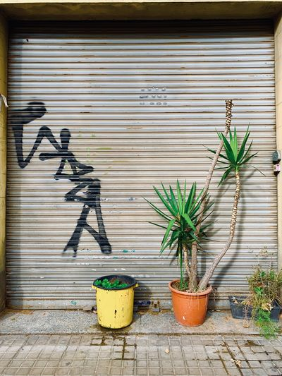 Potted plants growing against wall