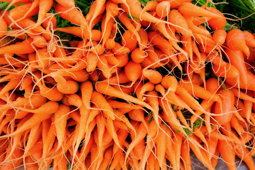 Agriculture Colors Farm Freshness Baby Carrots Backgrounds Carrots Close-up Day Food Food And Drink Freshness Full Frame Growth Healthy Eating Nature No People Orange Color Outdoors Vegetable