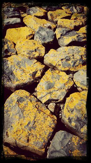Strand Schelde Steine Gelb Paint The Town Yellow