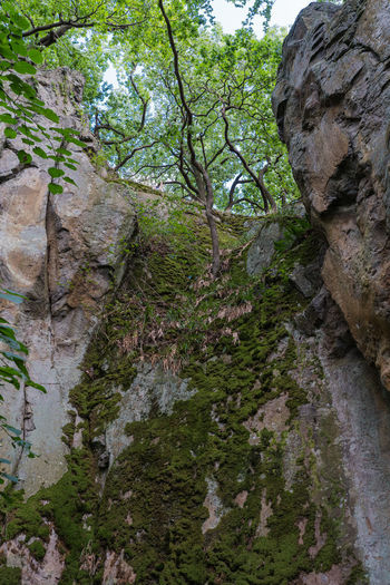 Low angle view of rock formation amidst trees in forest