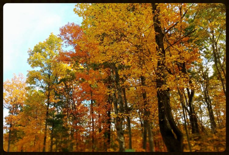 Michigan Oxford, Michigan Fall Beauty Fall Colors Trees And Nature Nature Colors