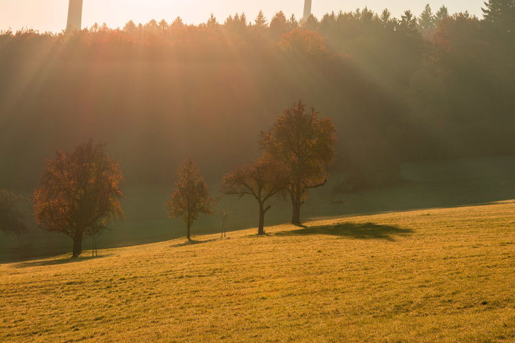 Sunrays Tree Tranquility Beauty In Nature Tranquil Scene Landscape Scenics - Nature Autumn Environment Nature Grass No People Field Sunlight Change Sun Autumn Collection Sunrise Morning Light Nature Photography