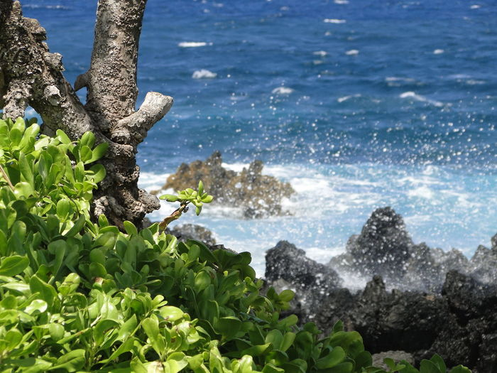 Hawaii Maui Beach Beauty In Nature Close-up Day Growth Horizon Over Water Maui Hawaii Nature No People Outdoors Scenics Sea Sky Tranquil Scene Tranquility Tree Water