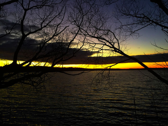 Bare trees in lake at sunset