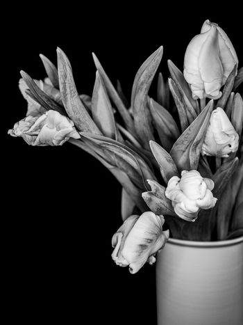Tulip Bouquet Vase Beauty In Nature Black Background Bnw Bnw_collection Bouquet Close-up Flower Flower Head Fragility Freshness Nature No People Petal Studio Shot Vase Of Flowers